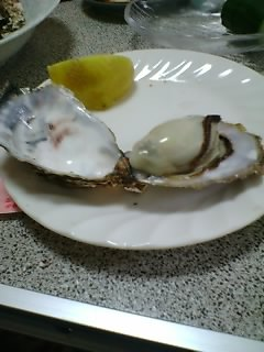 050423oyster2