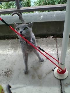 リードに捕まる猫