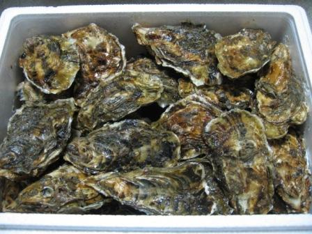 060127oyster