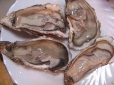090315oyster2