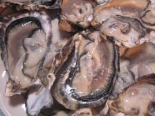 090315oyster3_2