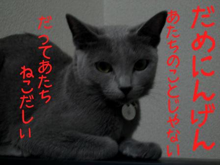 060913neko2_1
